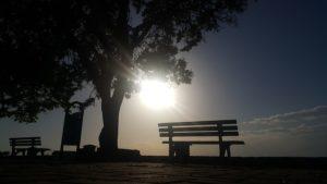 朝日とベンチ