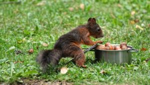 リスが鍋に食べ物を入れている様子