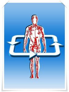 血管の流れ