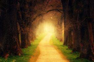 光につながる道