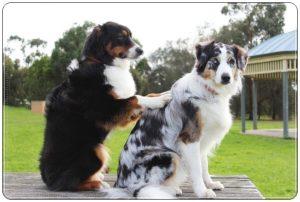 犬のマッサージ