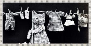 猫が洗濯物を干しているところ
