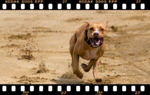 犬が走っているところ