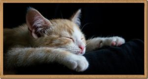 子猫が寝ている姿