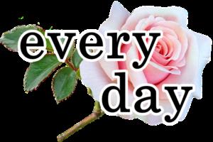 バラの花に「every day」の文字
