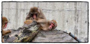 サルのマッサージ