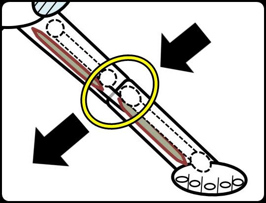 ひざの力のかかり方と、伸び方