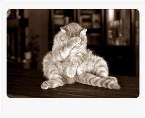 猫が悩む姿