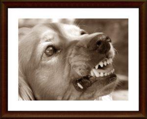 犬が歯を出しているところ