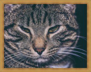 猫の嫌な顔