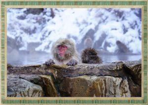 サルが温泉に入っているところ