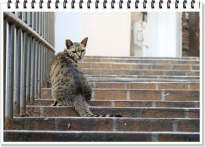 猫の振り返り