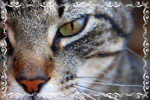 猫が見つめている