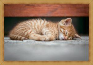 子猫の睡眠