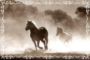 馬が走っているところ