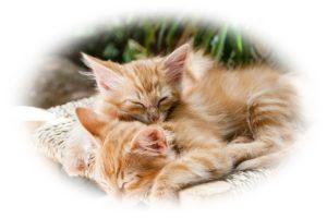 子猫が寝ているところ