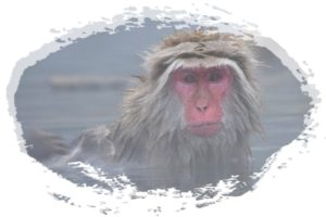 サルがお風呂に入っている