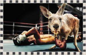ボクシングでカンガルーが勝った試合