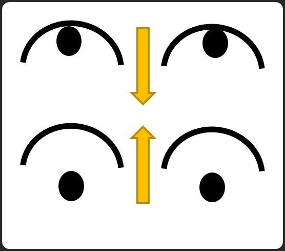 目は縦横に動く