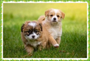 2匹の子犬