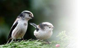 小鳥 2羽