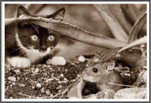 猫がねずみを食べるところ