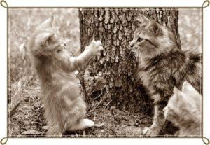 猫が戦う2匹