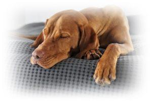 大きな犬が寝ているところ