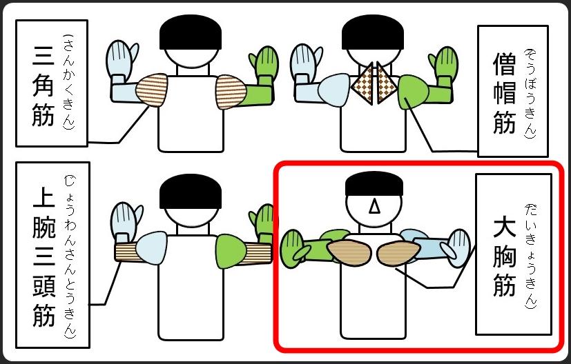 腕を広げた腕立て伏せで鍛えられる筋肉 大胸筋