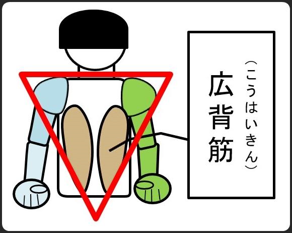 広背筋を作ると逆三角形になる