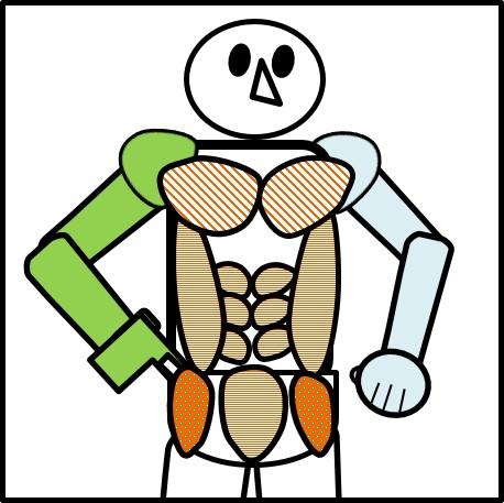 腹筋と連動する筋肉