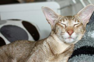 猫が眠っているところ