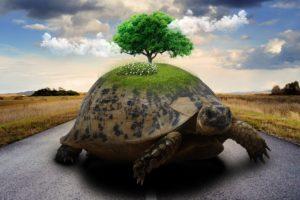亀の甲羅に木が生えている