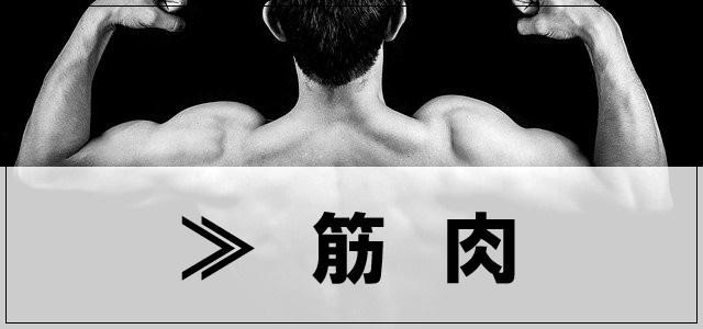 筋肉のカテゴリーについて