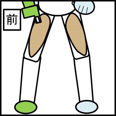 太ももの表側の筋肉