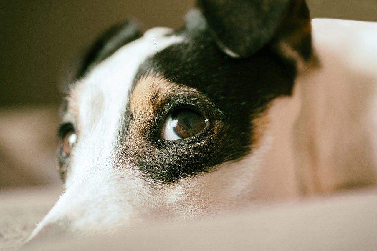 犬がこっちを見ている