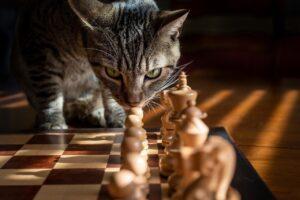 猫が狙っている