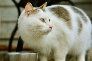 猫が餌を食べているところ
